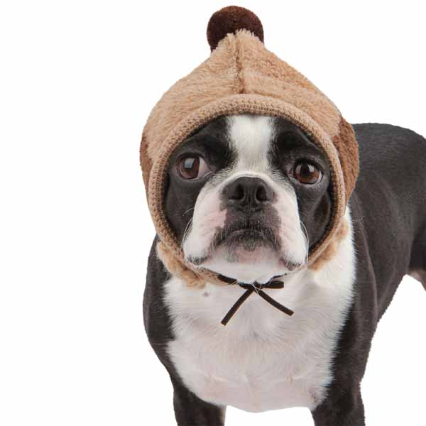Dodo Dog Hat by Puppia - Brown