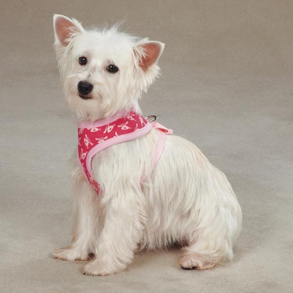 Dog is Good Bolo Dog Harness - Raspberry Sorbet