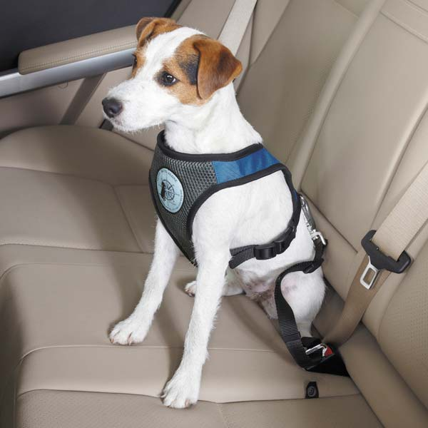 Best Harness For Dogs In Cars