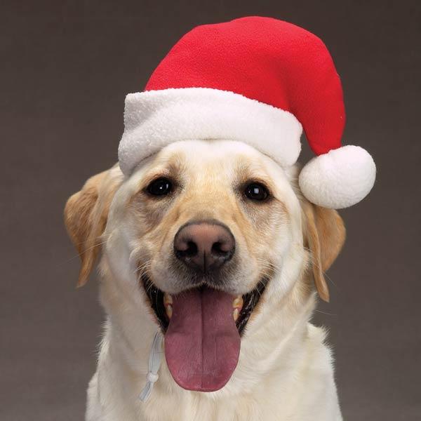 Dog santa hat baxterboo