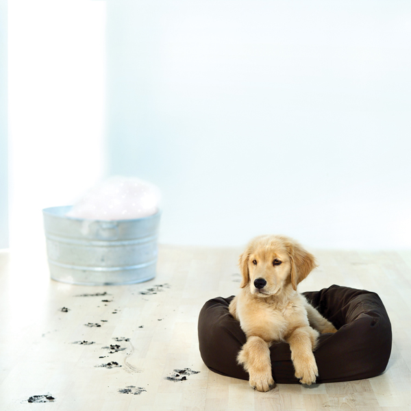 Donut Dog Bed by Dog Gone Smart - Brown