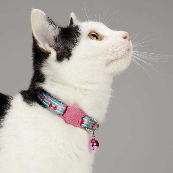 Fruit Frenzy Cat Collar