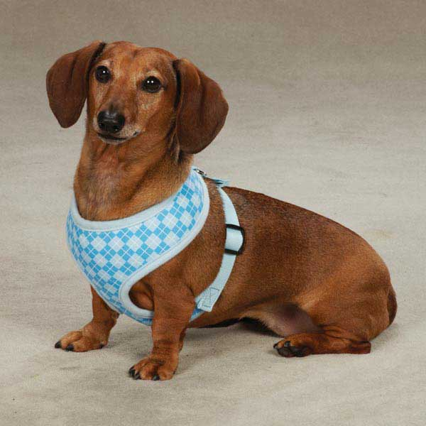 East Side Collection Prep School Dog Harness - Blue Plaid
