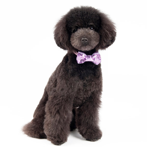 EasyBOW Sequins Dog Collar Attachment by Dogo - Purple