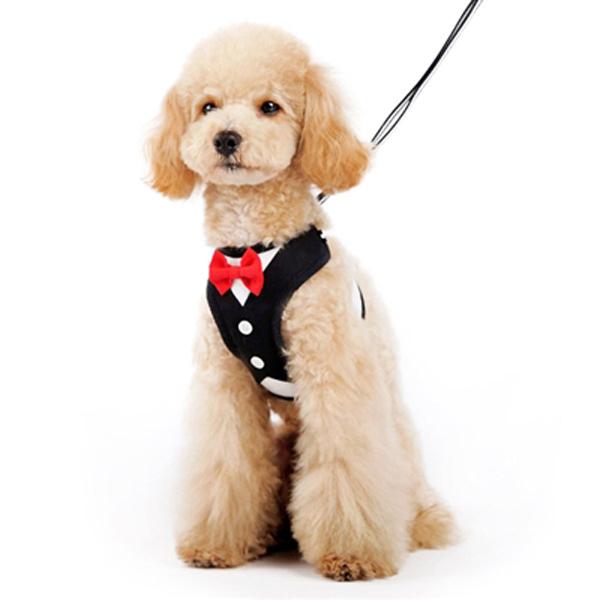 EasyGo Bowtie Dog Harness by Dogo