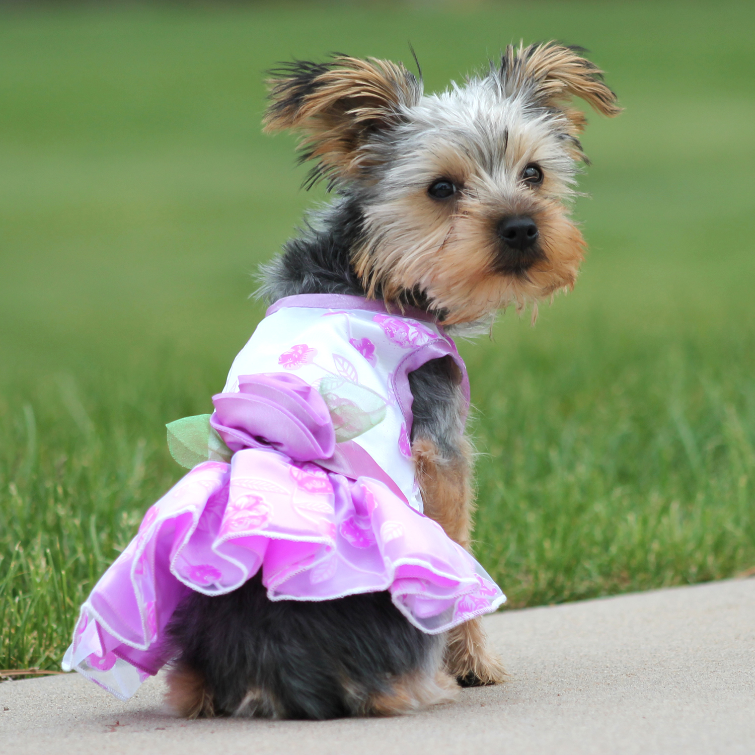 Elegance Rosette Dog Dress by East Side Collection - Purple
