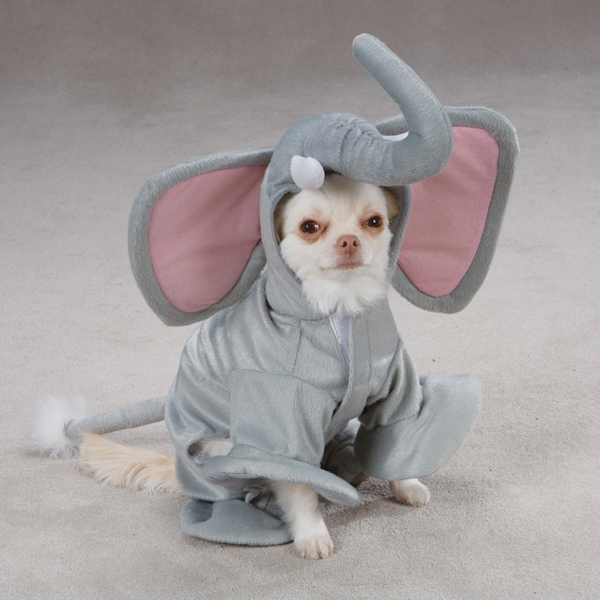 Elephant Costume for Dogs by Casual Canine