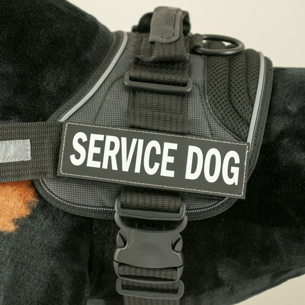 EzyDog Convert Harness Custom Side Patches - Service Dog