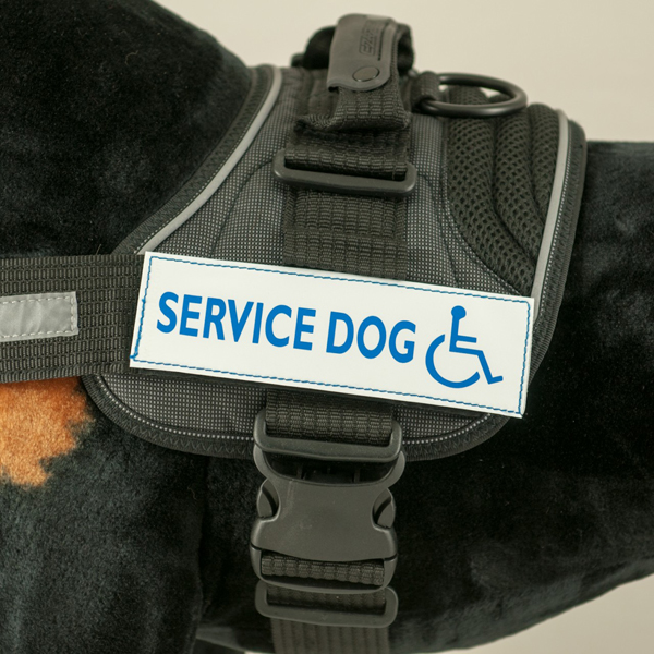 EzyDog Convert Harness Custom Side Patches - Service Dog - White with Chair
