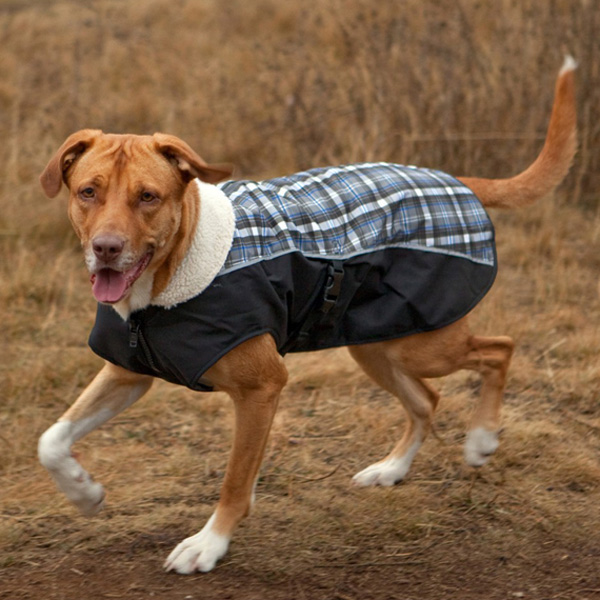 EzyDog Mission Dog Coat - Gideon