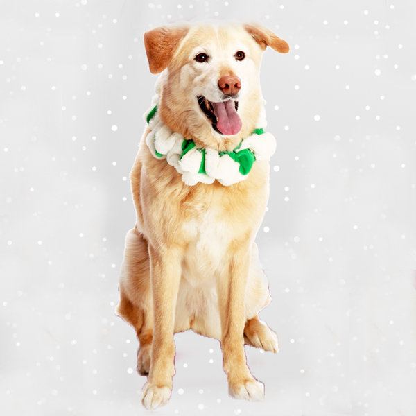 Fox and Hound Green Santa Dog Scrunchie