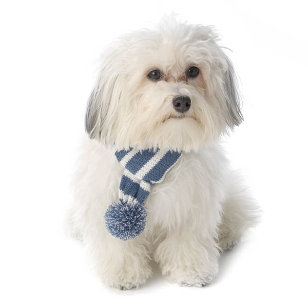 Frosty's Snowflake Dog Scarf - Winter Blue