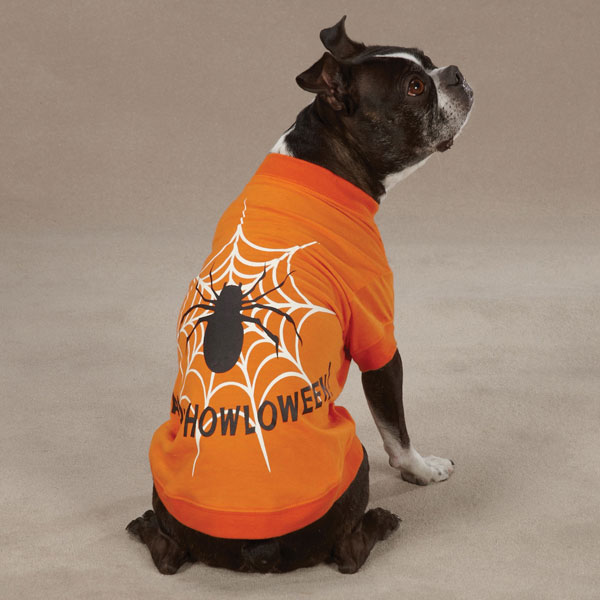 Glow Web Halloween Dog T-Shirt by Zack & Zoey