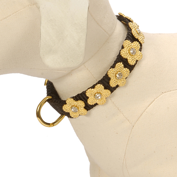 Gracie Gold on Black Daisy Dog Collar
