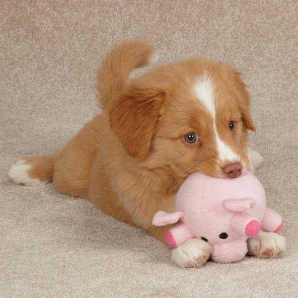 Grriggles Funny Farm Dog Toy - Pig
