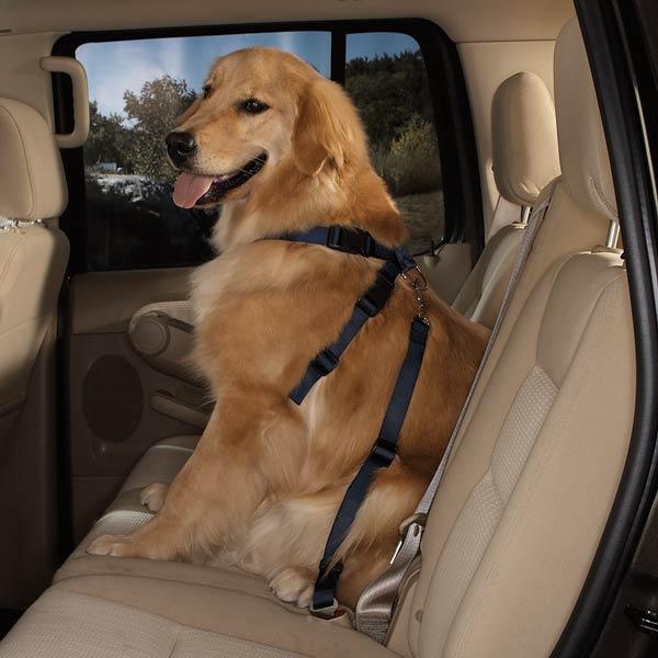 Guardian Gear Dog Safety Car Harness - Black