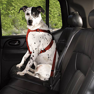 Guardian Gear Dog Safety Car Harness - Crimson Red