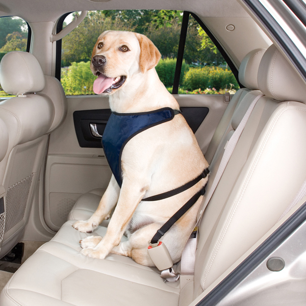 Guardian Gear Ride Right Dog Car Harness - Navy