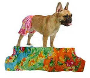 Hawaiian Swim and Board Dog Trunks - Green