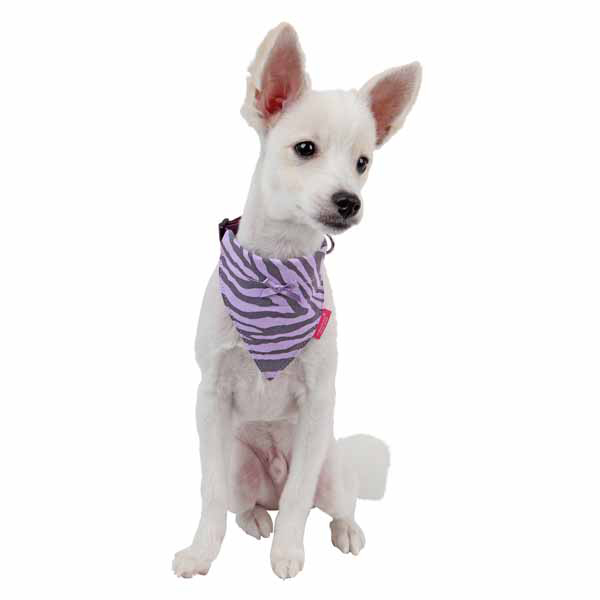 Leo Scarf Dog Collar by Pinkaholic - Violet
