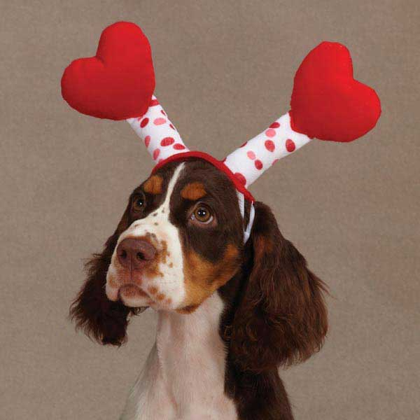 Love Bug Antennae for Dogs