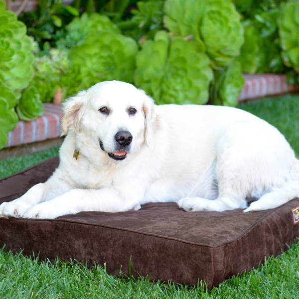 Luca Orthopedic Dog Bed - Chocolate