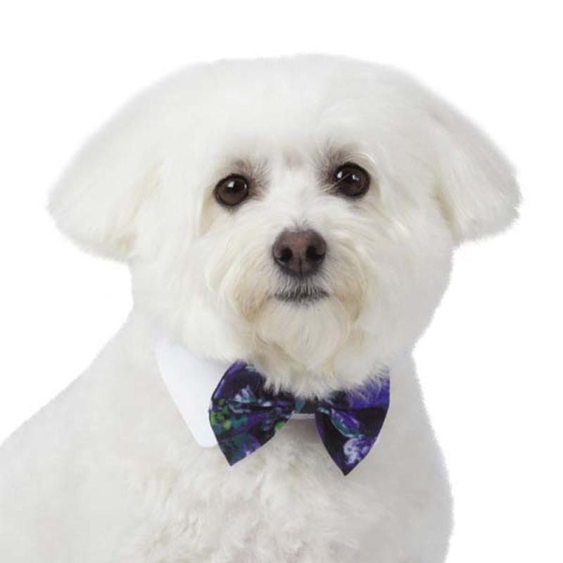 M. Isaac Mizrahi Dog Bowtie - Floral Dot