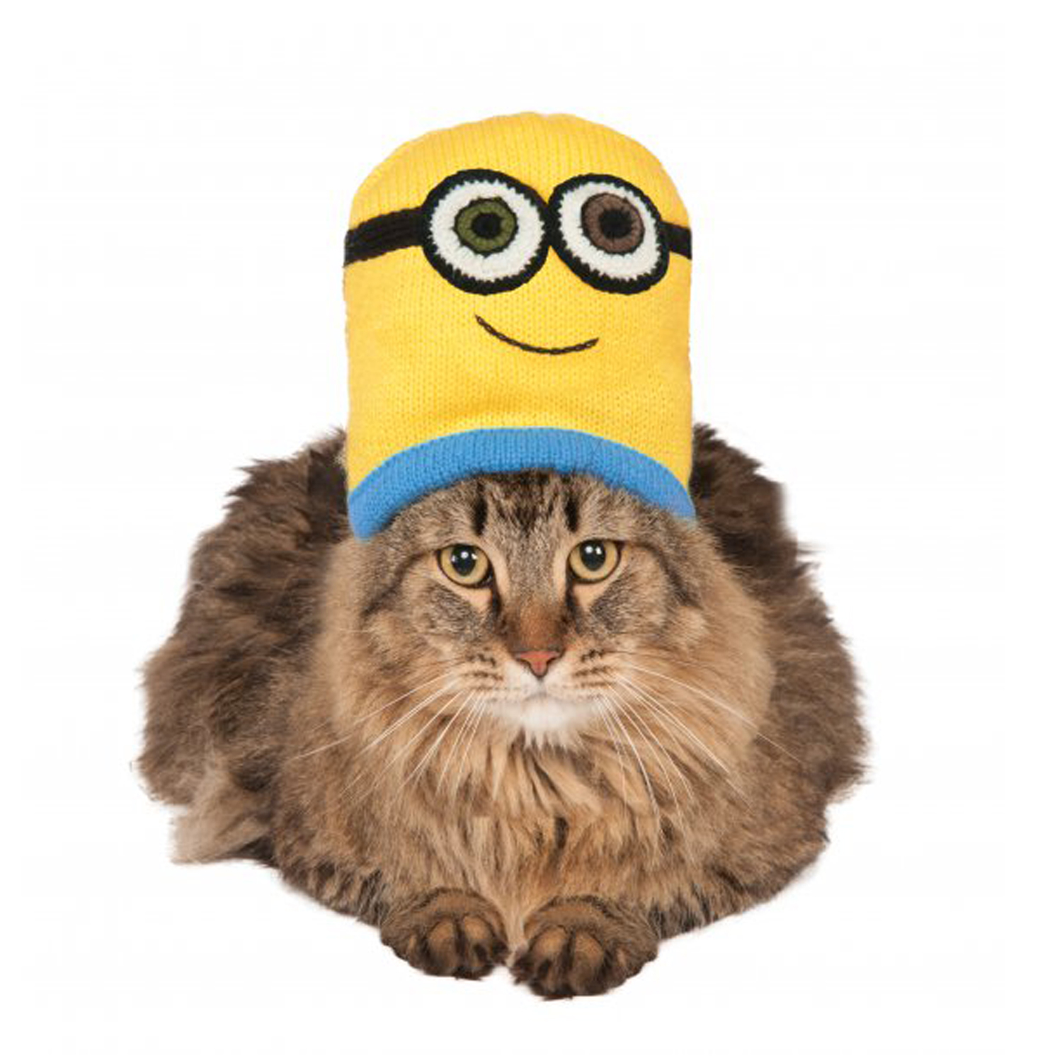 Uncover your cat's individuality with cat clothes, cat apparel and outfits from Petco. With sizes fitting most cats comfortably, find your purrfect outfit.