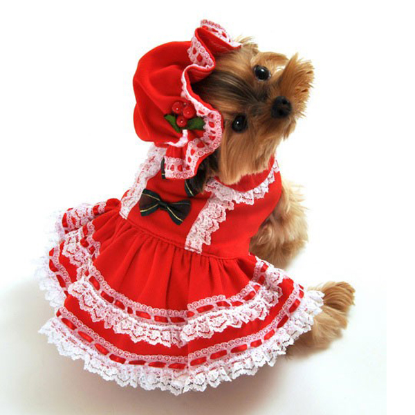 Dog Christmas Dress hd gallery