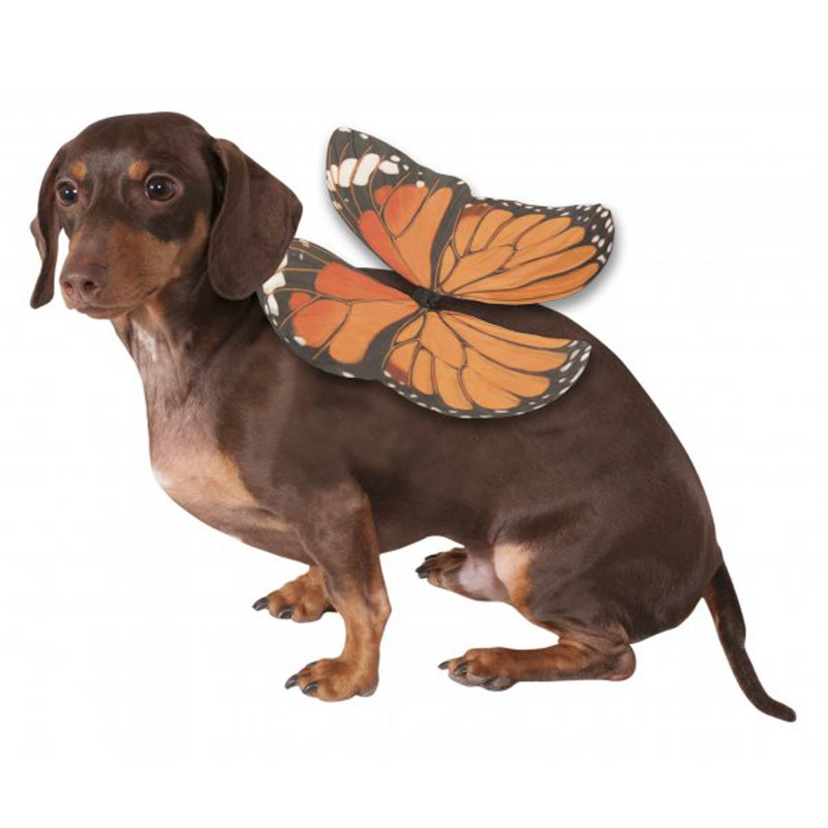 Monarch Dog Show