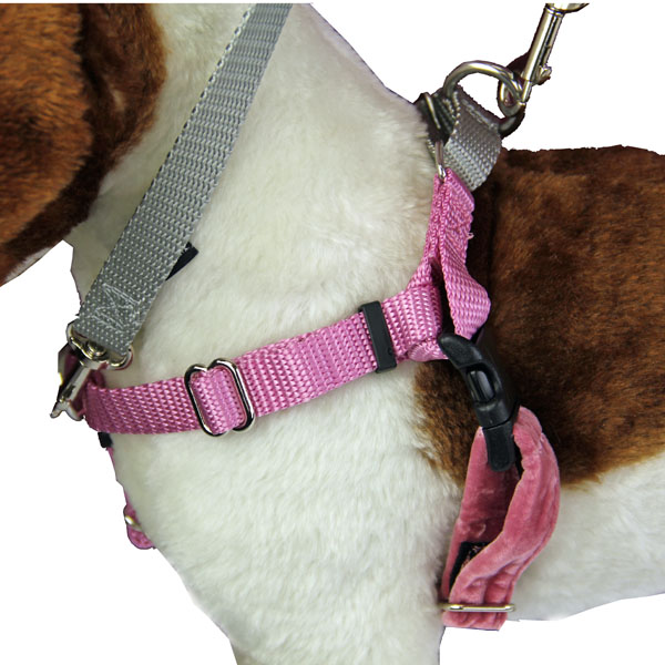 No Pull Dog Harness Deluxe Training Package Rose And