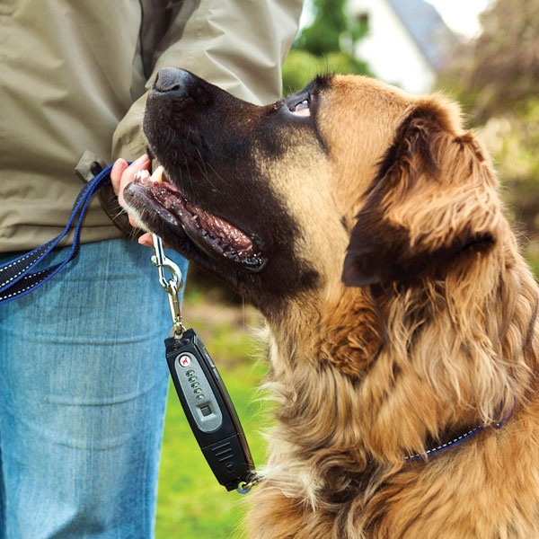 Patento Pet Dog-e-Walk Premium Dog Trainer System