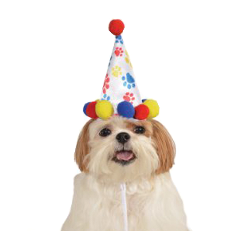 Paw Print Birthday Dog Hat