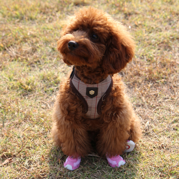 P.B. Dog Shoes by Puppia - Baby Pink