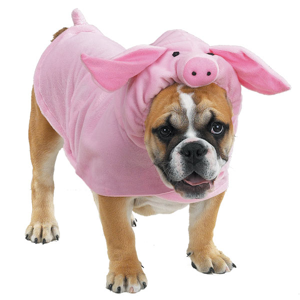 halloween costumes large dogs 10 dog halloween costumes smile