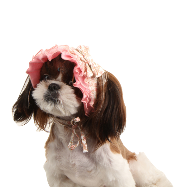 Primavera Dog Hat by Pinkaholic - Pink