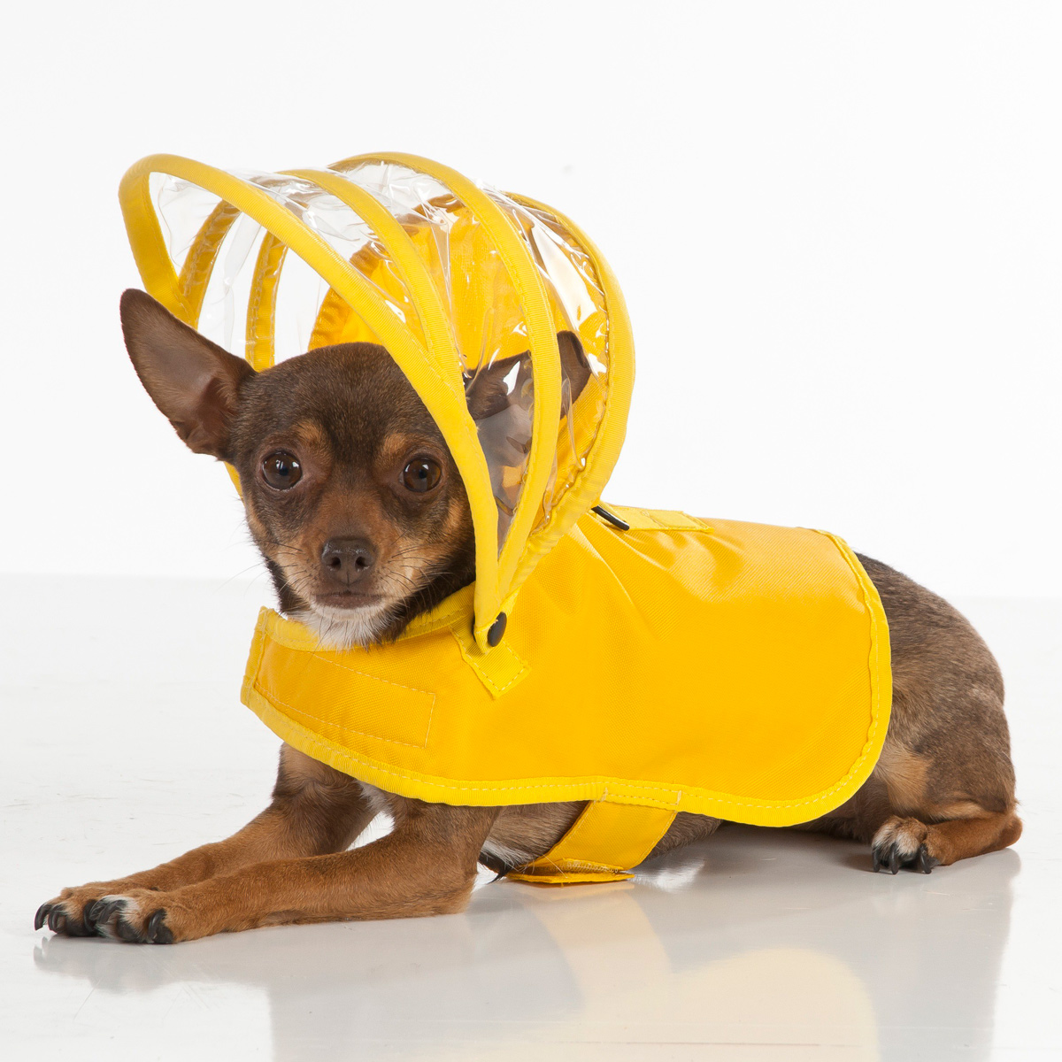 Big dog raincoat pet Satsuma large poncho four feet piece raincoat-in Cat Clothing from Home