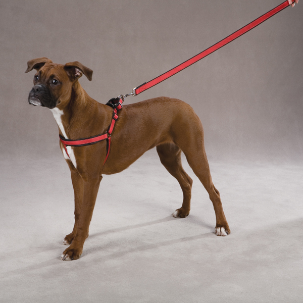 Reflective Cushion Dog Harness by Zack & Zoey - Red