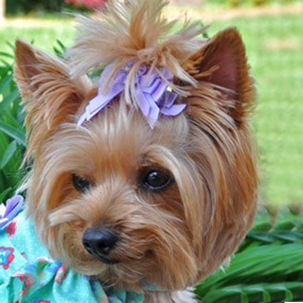 Satin Handmade Dog Bow - Lavender