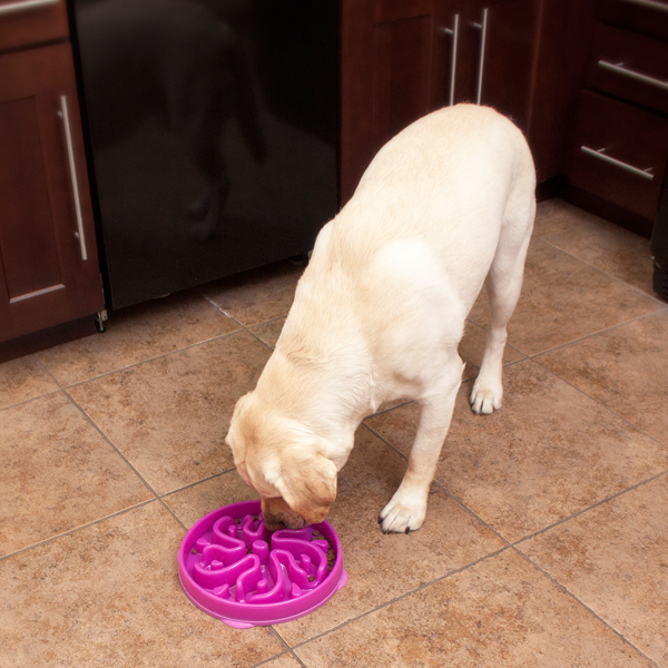 Slo-Bowl Slow Feeder Dog Bowl - Flower Mulberry