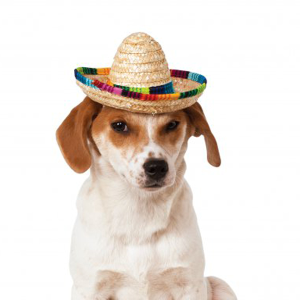 Sombrero Dog Hat Rubies Multi Colored Baxterboo