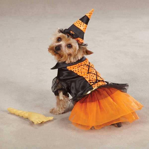 Spellhound Witch Halloween Dog Costume