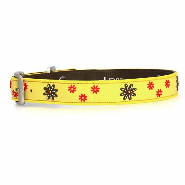 Yellow Dog Collar Petsmart