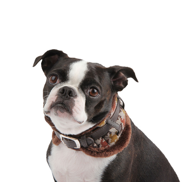 Tessell Neckguard Dog Collar by Puppia - Brown