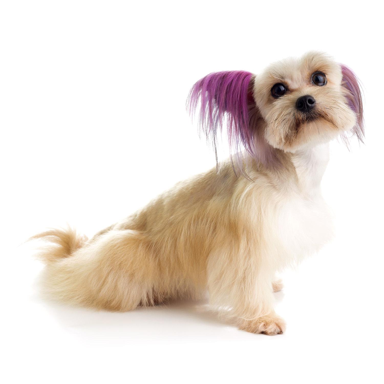Top Performance Dog Hair Dye Gels Baxterboo