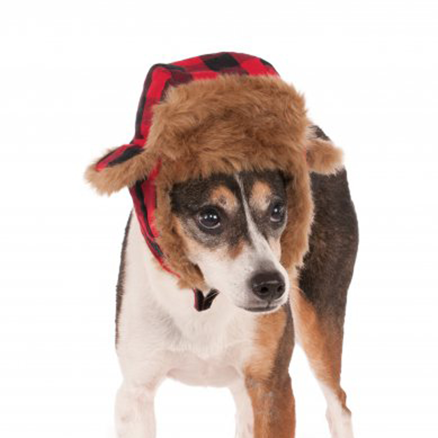 2f63f80188b Trapper Hat Dog Related Keywords   Suggestions - Trapper Hat Dog ...