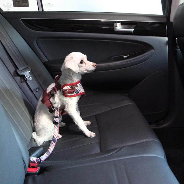 Vogue Dog Seatbelt Leash by Puppia - Beige