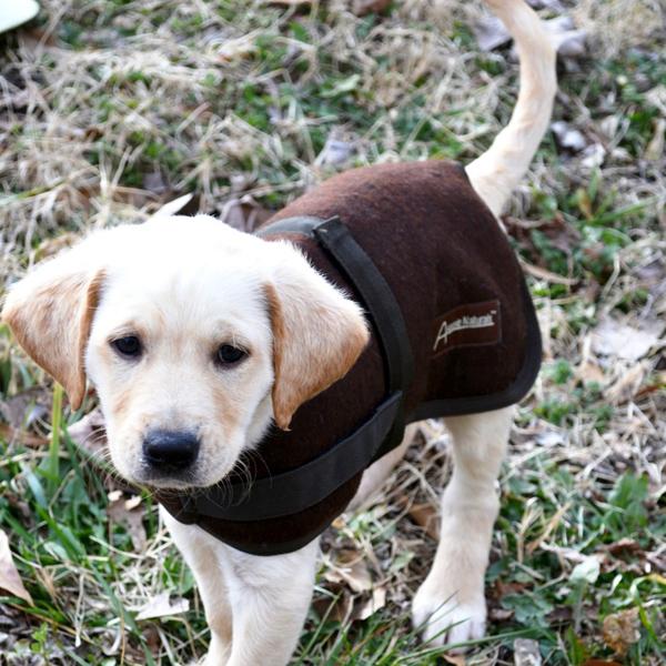 Wagga Wool Dog Coat - Chocolate Brown