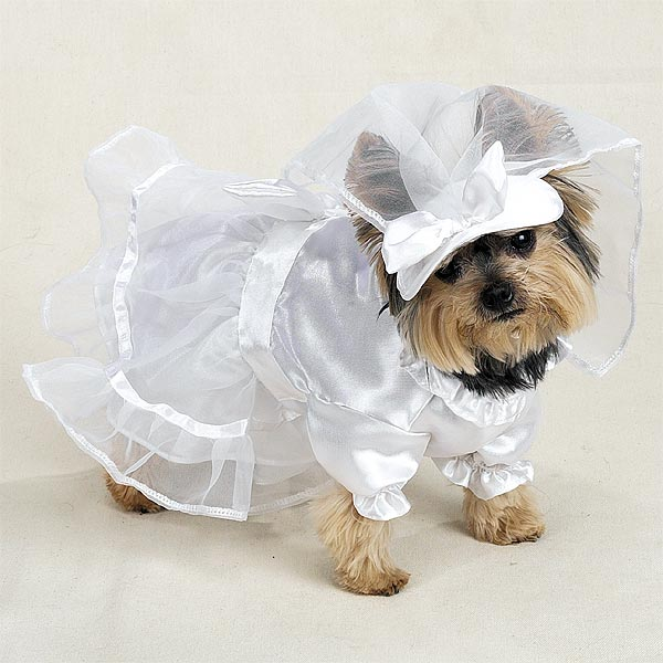 wedding dress with veil dog halloween costume by casual canine
