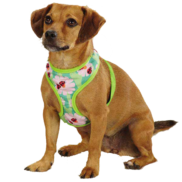 Zack & Zoey Flutter Bugs Dog Harness - Lady Bug